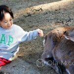 Nara - daniele są bardzo łagodne...