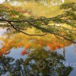 Nara Park - Japończycy to mistrzowie zakładania ogrodów