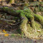 Nara Park - ... a może to dusze zaklęte w drzewa?