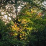Nara Park - Japoński park ma wyglądać pięknie o każdej porze roku