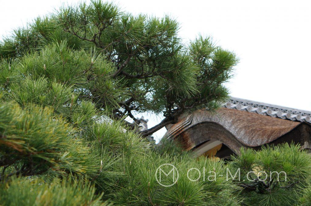 Kioto, świątynia Nishihongan-ji