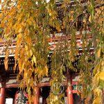 Tokio, Świątynia Senso-ji w pięknych jesiennych kolorach