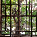 Tokio - dzielnica Ueno - japońskie herbaciarnie do oazy spokoju, także jeśli chodzi o wystrój