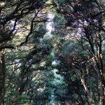 Tokio - Świątynia Meiji - droga do świątyni to aleja okolona majestatycznymi drzewami