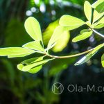 Malaga - ogród botaniczny - piękna gra słońca i cienia