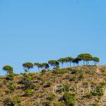 Malaga - ogród botaniczny - takie drzewa na wzgórzach to dla mnie jeden z charakterystycznych widoków Andaluzji