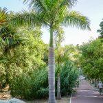 Malaga - ogród botaniczny - sekcja prezentująca różne gatunki palm