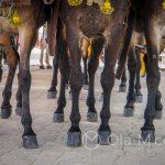 Andaluzja - Fiesta - Feria de Ronda - nawet taki laik jak ja potrafi rozpoznać, że te konie są przepiękne