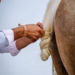 Andaluzja - Fiesta - Feria de Ronda - Andaluzyjczycy są niesamowicie dumni ze swoich koni