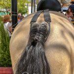 Andaluzja - Fiesta - Feria de Ronda - andaluzyjskie konie są symbolem piękna i elegancji
