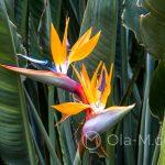 Malaga - egzotyczne kwiaty w parku u podnóża Gibralfaro