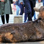 Nara - niektóre daniele bezczelnie oblegają ulice i skrzyżowania