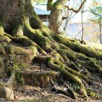 Nara Park - drzewa z duszą...