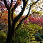 Tokio - Ogród Rikugi-en