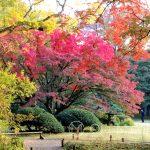 Tokio - Ogród Rikugi-en - feeria barw