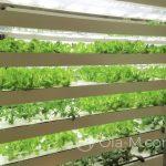 Tokio - sklep papierniczy Itoya w dzielnicy Ginza - farma ekologiczna na 11-stym piętrze