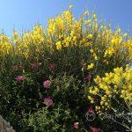 Marsylia - Fort Saint-Jean - piękny ogród zaprasza do chwili wytchnienia