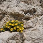 Marsylia - Frioul - Ratonneau - natura wciska się w każdy możliwy i niemożliwy zakamarek