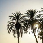 Plaża Pedregalejo - palmy i zachód słońca - tak, jest to kicz w całej okazałości, ale ja takie kicze lubię :-)