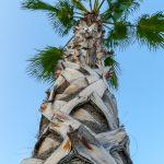 Port w Maladze - ciekawa forma palmy, przez naszą rodzinę nazwana palmą szarlotkową, bo ma taką kratkę jak my czasem na szarlotce