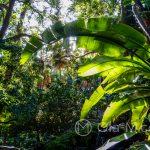 Malaga - ogród botaniczny - w niektórych miejscach czuliśmy się jak w lesie tropikalnym