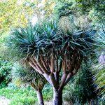 Malaga - ogród botaniczny - także dla dorosłych ciekawe jest uświadomienie sobie, że istnieją jeszcze inne drzewa niż swojskie buki i brzozy...