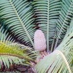 Malaga - ogród botaniczny - dla naszej córki ciekawe było odkrywanie niecodziennych roślin