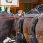 Andaluzja - Fiesta - Feria de Ronda - kunsztownie zaplecione ogony jeszcze tylko podkreślają piękno tych koni
